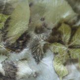 ecoprinten en natuurlijk verven